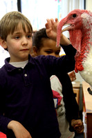 Tom Turkey Visits Kindergarten
