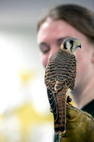 Raptor Center Visits Preschool
